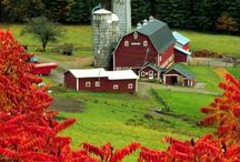 Barns / by Initial Outfitters With Brenda Boring