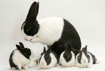 Rabbits / by Jessica Kelly