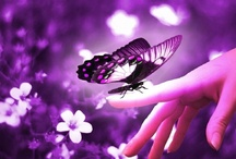 Butterflies / by Jessica Riddle