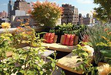 Urban Gardens / by Urban Gardens