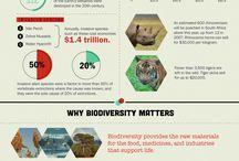 Biodiversity Essays