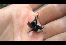 bees / by Amy Walker Weinzierl