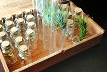 Apothecary Obsession  / by Allison Metz