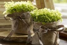 green & brown / ...go together like dark chocolate & mint! / by JoAnne Pintar