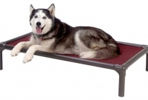 Alaskan Husky / by Kuranda Dog Beds