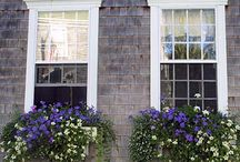 Window boxes / by Maureen Stannard