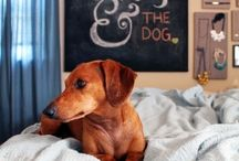 "my ""I Love Dogs"" stuff / by Christy McCraw"