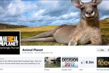 Social Media Profile Design / Facebook Cover Photos and Twitter backgrounds that we admire. / by MORE Advertising