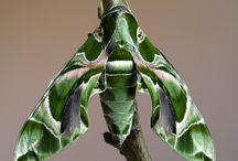 Beautiful Bugs / by Judy Morehouse