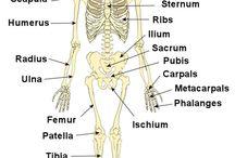 Study Of The Human Body / by Ann Davis