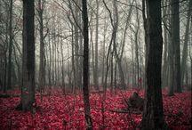 BeautifulPictures / by Morgan Milton