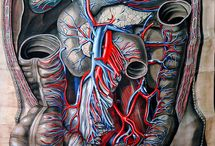 Our Body❤️ / It's whats on the inside that counts / by Dimond Polar