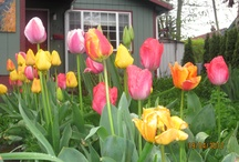 Flowers and gardens / My favorite flower and gardens / by Kaya Singer