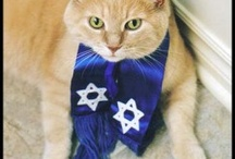Jewish Animals!! / by Congregation Solel