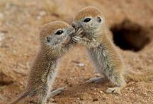Preciousness / animals and babies / by Jennifer Ohashi