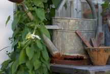 WATERING CANS  and OLD WASH TUBS I love / by Lynn Smith Barbadora(Painting Thyme Needfuls)