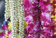 Flowers india / by Holi-Hai, la boutique aux couleurs de l'Inde