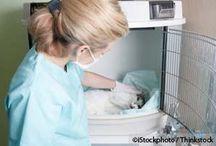 Helpful Info & Fun Stuff For Pets / by Rebecca