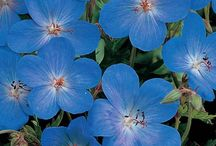Flowers / by Bryce J MacDonald