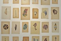 collect / by Gemma Goodwin
