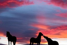 Wild Horses / These beautiful horses are photographed running in the wild. / by Providence Hill Farm