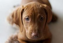 Beautiful puppy / by Kirsten Barouch