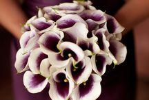 Purple Wedding Bouquets / by Married In Milwaukee
