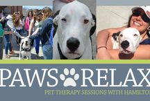 Paws and Relax / Petting an animal has been shown to reduce the stress and anxiety that comes with being a college student. Paws and Relax is a pet therapy program at UNH that aims to enhance the well-being of students.   Learn more: http://www.unh.edu/health-services/pawsandrelax / by UNH Health Services