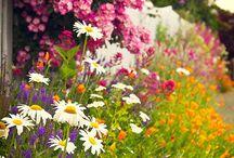 Garden / by Lisa Staffaroni