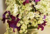 Blooms / by konfetti