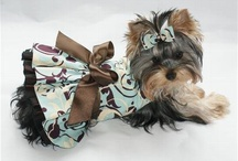 Pet Clothes / by Judy Rogers