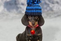 Dachshunds and Doggie Stuff / by Liz Sterner