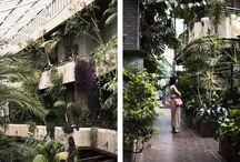 Gardens / by Leah Swain
