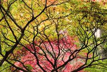 Nature / by Eveline Deinum