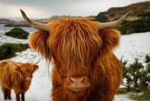 Animals / by Wendy Reiten