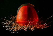 marine life / by David Latch