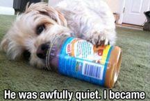 Cute Doggie Stuff / by Rashell Szybiak