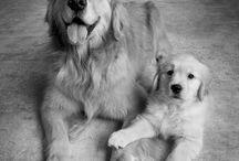 I want a puppy / by Brynn Mirau