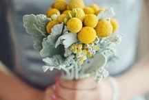 Plants and their secrets / by Gabriela