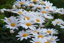 Garden Ideas / by Lisa & Stuart Mckenna