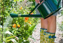 Garden / by Melissa S