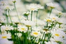 gardening / by Rachel Kne