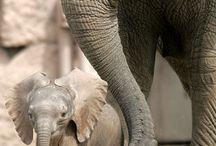 ELEPHANTS / by May khatib