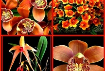 Orchids Majestic Beauty / Orchids are usually grown in green houses but can be grown at home with a little care. I put 3 ice cubes per plant once a week. Then fertilize when they start to grow in the spring. There are 35,000 species of Orchids so amazing! / by * Stardust *
