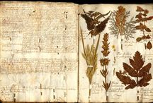 Herbarium-Botanicals / by MagaMerlina