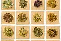 Homeopathy / by Lindsey Myers