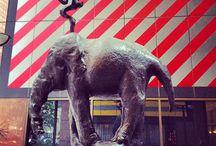 Elephants Are Everywhere / by Allison Bechtel