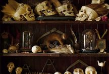 Cabinets of Curiosities / by Louis 路易斯 Bastide