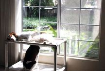 Brittany Spaniel / Brittany Spaniels and their Kuranda beds! / by Kuranda Dog Beds