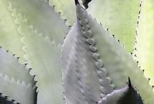 Plants! / by Paula Henson